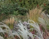 Grassen moederveldjes (foto: Pia van Spaendonck)