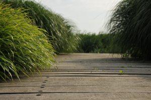 siergrassen-Kwekerij-In-Goede-Aarde
